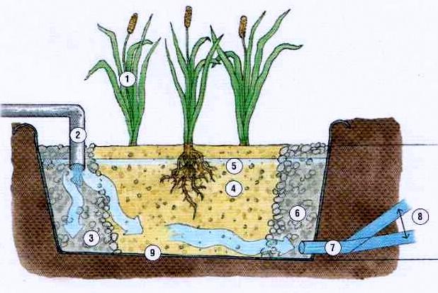 Phyto puration - Lagunage des eaux usees ...